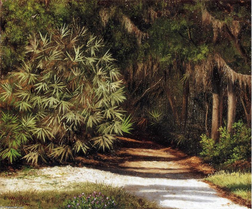 Escena del bosque con los rboles cubiertos de musgo y - Reproduccion del bambu ...