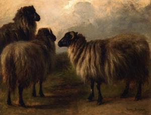 Rosa Bonheur - Tres Ovejas Wooly