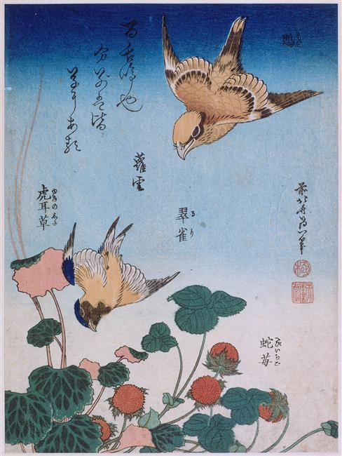 Swallow and begonia and strawberry pie, 1834 de Katsushika Hokusai (1760-1849, Japan) | Reproducciones De Pinturas Famosas | WahooArt.com