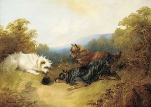 George Armfield (Smith) - Terriers Rabbiting