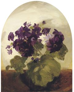 James Stuart Park - Cineraria
