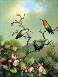 Martin Johnson Heade - rubythroat de norte América