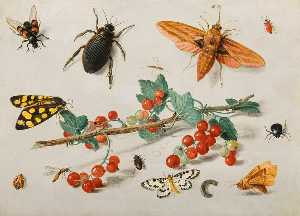 Jan Van Kessel The Elder - insectos