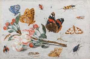 Jan Van Kessel The Elder - Estudio de Mariposas y otra Insectos con un Puntilla de apple Flor