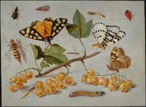 Jan Van Kessel The Elder - mariposas asícomo  insectos